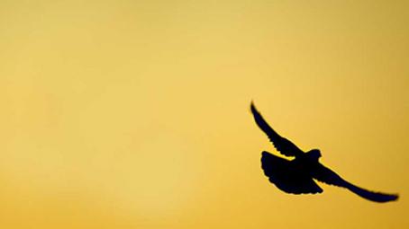 Liberdade em Deus