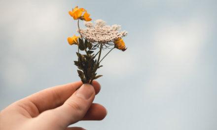 Como uma flor…