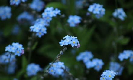 Como a delicadeza das flores…