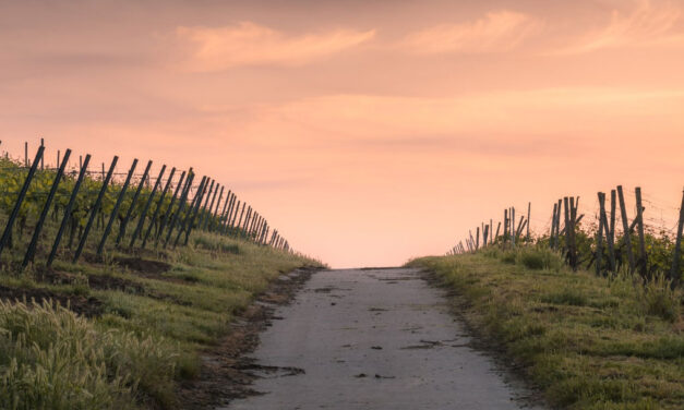 Caminho estreito: caminho de felicidade.