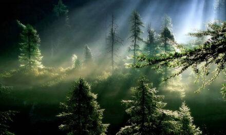 A humildade é a virtude do Advento: fazer espaço a Deus que vem…