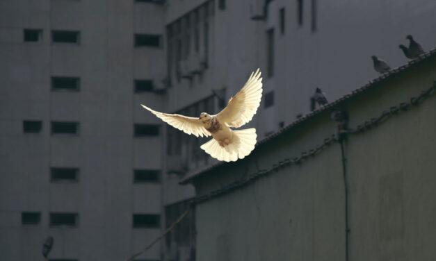 Ser anjo de paz